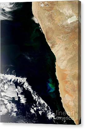 Phytoplankton Bloom Off Nambia Canvas Print by Nasa