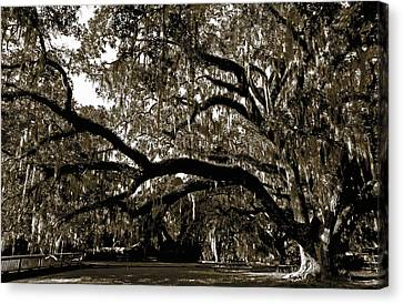 Canvas Print featuring the photograph Picnic Under The Oak by DigiArt Diaries by Vicky B Fuller