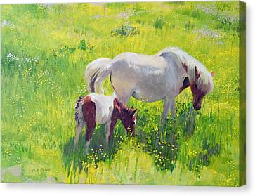 Piebald Horse And Foal Canvas Print by William Ireland