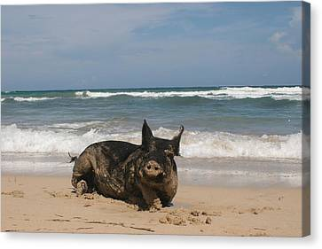 Pig In Paradise Canvas Print