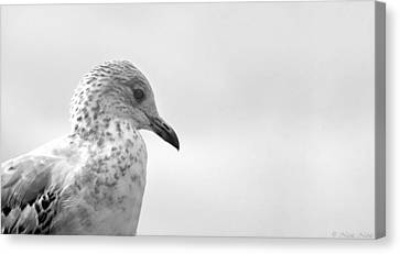 Canvas Print featuring the photograph Pigeon Pride by Nicola Nobile