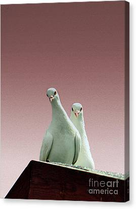 Pigeons In The Pink Canvas Print by Linsey Williams