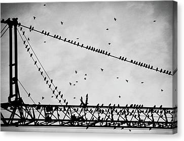 Pigeons Sitting On Building Crane And Flying Canvas Print by Image by Ivo Berg (Crazy-Ivory)