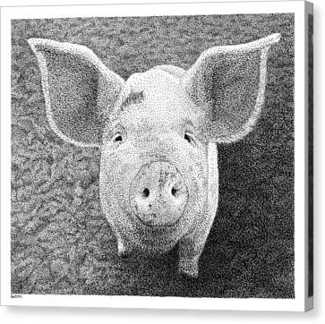 Piglet Canvas Print by Scott Woyak