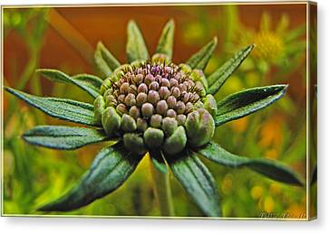 Canvas Print featuring the photograph Pinchshin Bud by Debbie Portwood