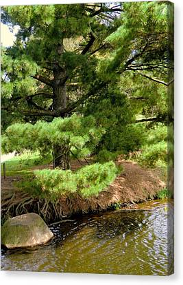 Pine Along The Water Canvas Print by Mindy Newman