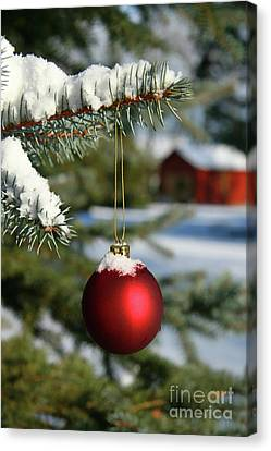 Festivities Canvas Print - Pine Branch And Red Ball by Sandra Cunningham