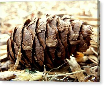 Canvas Print featuring the photograph Pine Cone by Cindy Wright