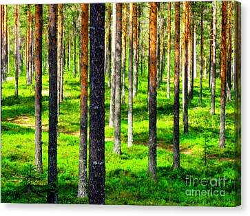 Pine Forest Canvas Print by Pauli Hyvonen