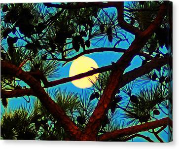 Pine Tree Moon Canvas Print
