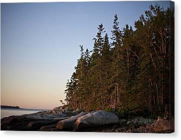 Mid-coast Maine Canvas Print - Pine Trees Along The Rocky Coastline by Hannele Lahti