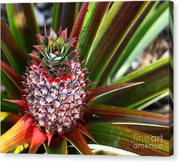 Canvas Print featuring the photograph Pineapple by Denise Pohl