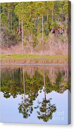 Pinetreeflection Canvas Print
