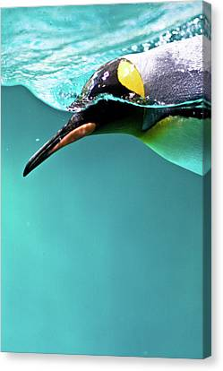Pinguin Canvas Print by Www.photo-chick.com