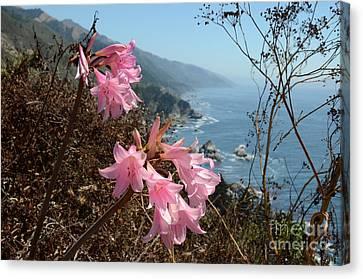 Pink Amaryllis Canvas Print