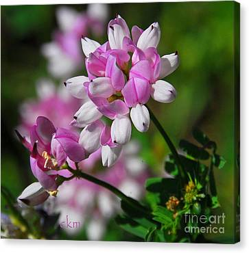 Canvas Print featuring the photograph Pink And White by Cindy Manero