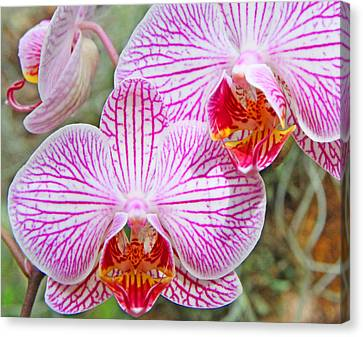 Pink And White Orchids Canvas Print by Becky Lodes
