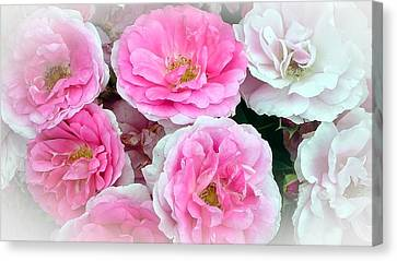 Pink And White Rose Melody Canvas Print by Chantal PhotoPix