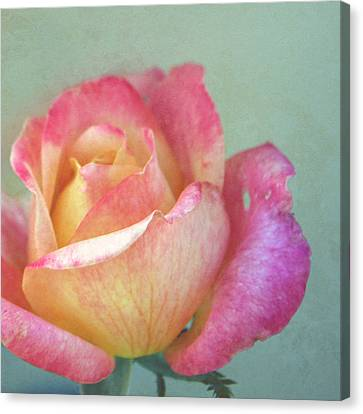 Canvas Print featuring the photograph Pink And Yellow Rose On Robin's Egg Blue by Brooke T Ryan