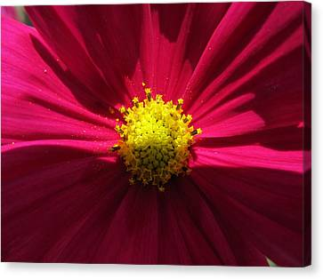 Canvas Print featuring the photograph Pink Beauty by Tina M Wenger