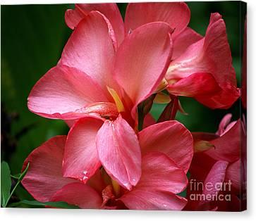 Pink Canna Canvas Print