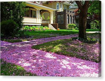 Pink Carpet Canvas Print by Mark Gilman