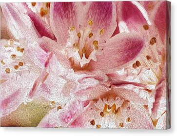 Pink Canvas Print by Celso Bressan