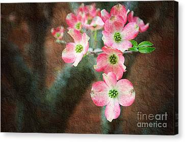 Pink Dogwood Cascade Canvas Print by Andee Design