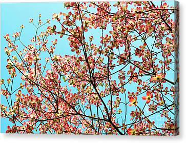 Pink Dogwood Sky Canvas Print by Debbie Portwood