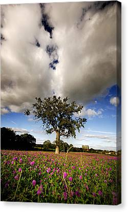 Canvas Print featuring the photograph Pink Drops by John Chivers