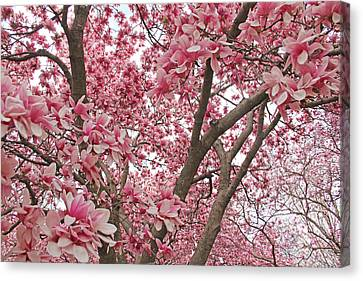 Pink Everywhere Canvas Print by Becky Lodes