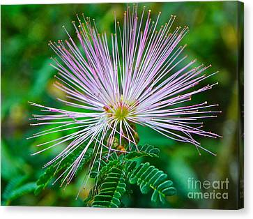 Canvas Print featuring the photograph Pink Expression by Eve Spring