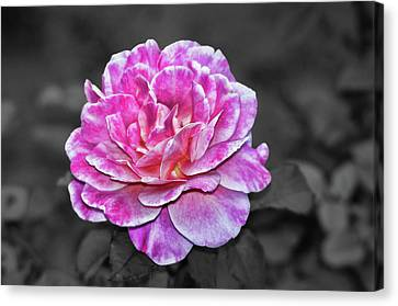 Pink Flame Canvas Print by Mariola Bitner
