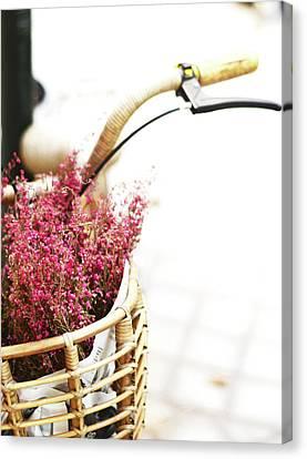 Pink Flowers In Bicycle Basket Canvas Print