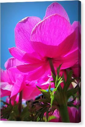Pink Flowers In The Sky Canvas Print by Eva Kondzialkiewicz