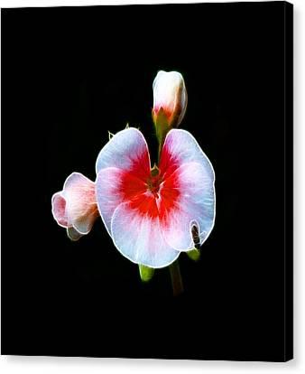 Canvas Print featuring the photograph Pink Geranium by Lynn Bolt
