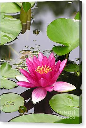 Pink Lily Flower  Canvas Print by Diane Greco-Lesser