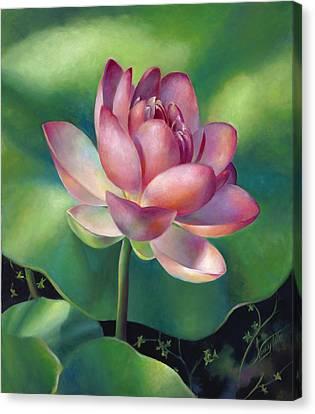 Pink Lotus Water Lily Canvas Print by Nancy Tilles