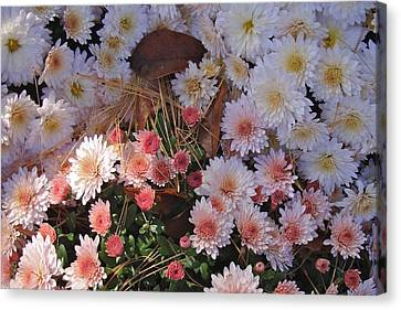 Canvas Print featuring the photograph Pink Mum by Joseph Yarbrough