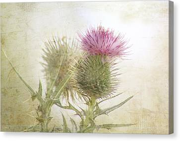 Kim Klassen Texture Canvas Print - Pink On Green by Margaret Hormann Bfa
