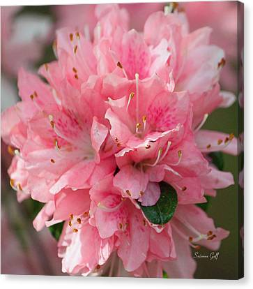 Pink On Pink Squared Canvas Print by Suzanne Gaff