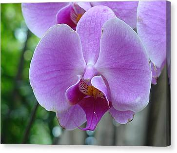 Canvas Print featuring the photograph Pink Orchid by Charles and Melisa Morrison