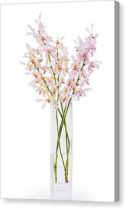 Pink Orchid In Vase Canvas Print by Atiketta Sangasaeng