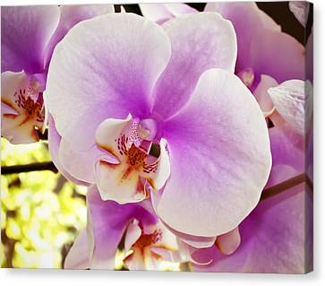 Pink Orchid Canvas Print by Joe Carini - Printscapes