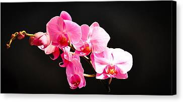 Canvas Print featuring the photograph Pink Orchids At A Party by Ronda Broatch