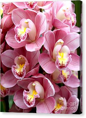 Pink Orchids Canvas Print by Debbie Hart