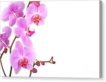 Pink Orchids Canvas Print by Jane Rix