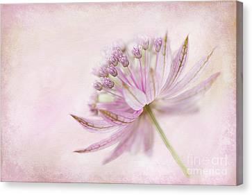 Pink Palette Canvas Print by Jacky Parker