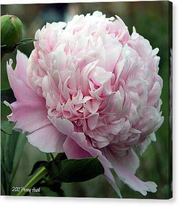 Canvas Print featuring the photograph Pink Peony Perfection by Penny Hunt
