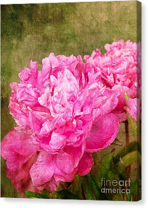 Pink Peony Texture 3 Canvas Print by Bob and Nancy Kendrick